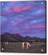 Horses With New Mexico Sunset Acrylic Print
