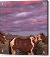 Horses With Southwest Sunset Acrylic Print