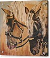 Horseshoe And Dan Acrylic Print