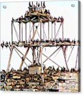 Horseshoe Reef Lighthouse 3 Acrylic Print