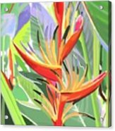 Hort Park Heliconia Acrylic Print
