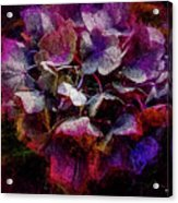Colorful Hortensia Closeup Acrylic Print