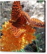 Horton Butterflies Acrylic Print