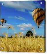 Hot Air Balloons Over A Wheat Field Acrylic Print
