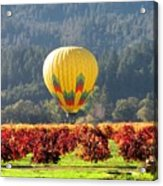 Hot Air In The Valley Acrylic Print by Gail Salituri