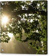 Hot Golden Mists Of Summer Acrylic Print