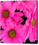 Hot Pink Flowers Acrylic Print