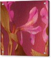 Hot Pink Lilies Acrylic Print