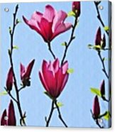 Hot Pink Magnolias Acrylic Print