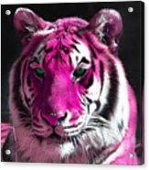 Hot Pink Tiger Acrylic Print