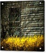 House Flowers Acrylic Print