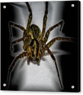 House Spider Acrylic Print