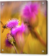 Hoverfly Thistle #g7 Acrylic Print