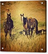 How 'bout Them Cowgirls Acrylic Print