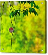 How To Catch A Tree Acrylic Print