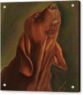 Howling Bloodhound Acrylic Print