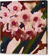 Hoya 2 Acrylic Print