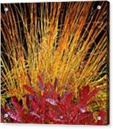 Huckleberry Glow Acrylic Print