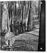 Hudson Mills Disc Golf Acrylic Print