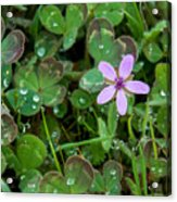 Huge Beauty In A Small Wildflower Acrylic Print