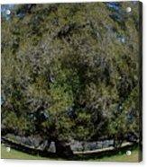Huge Live Oak Fisheye Acrylic Print