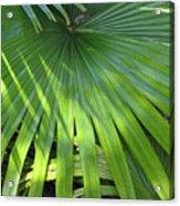 Huge Palm Leaf Acrylic Print