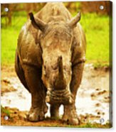 Huge South African Rhino Acrylic Print by Anna Om