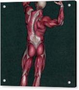 Human Anatomy 20 Acrylic Print
