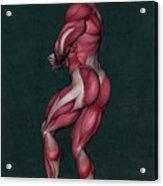 Human Anatomy 23 Acrylic Print