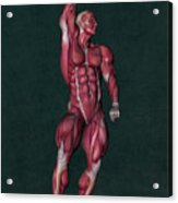 Human Anatomy 37 Acrylic Print
