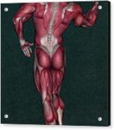 Human Anatomy 9 Acrylic Print