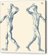 Human Muscular System - Dual View - Vintage Anatomy Poster Acrylic Print