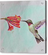 Humming Acrylic Print