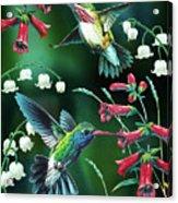 Humming Birds 2 Acrylic Print by JQ Licensing