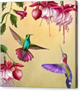 Humming Birds And Fuchsia-jp2784 Acrylic Print