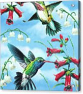 Humming Birds Acrylic Print by JQ Licensing