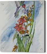 Hummingbird 2 Acrylic Print