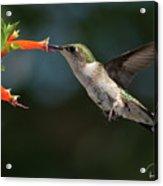 Hummingbird #4 Acrylic Print