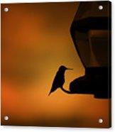Hummingbird After The Storm Acrylic Print