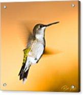Hummingbird Agains The Sunset Acrylic Print