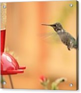 Hummingbird And Feeder Acrylic Print