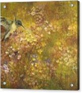 Hummingbird And Hydrangeas Acrylic Print
