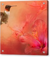 Hummingbird And Peach Hibiscus Acrylic Print