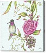 Hummingbird And Rose Acrylic Print