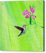 Hummingbird And Sweet Peas Acrylic Print