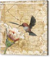 Hummingbird And Wildflower Acrylic Print