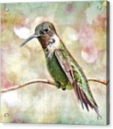 Hummingbird Art Acrylic Print by Bonnie Barry