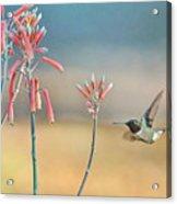 Hummingbird Beak On Horizon Acrylic Print
