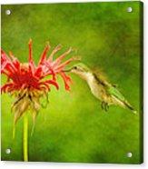Hummingbird Bee Balm And Textures Acrylic Print