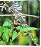 Hummingbird Bee Acrylic Print